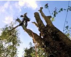 Schmidts Tree Service