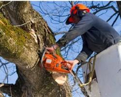 Holtz Tree Service