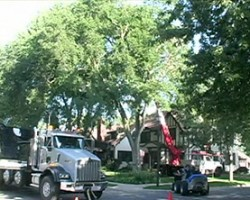 K.C. Groves Tree Experts