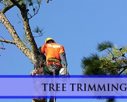 L.C.S. Lawn and Tree Service Inc.