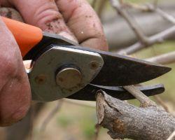 Dannys Tree Service