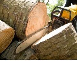 Gonzales Tree Service
