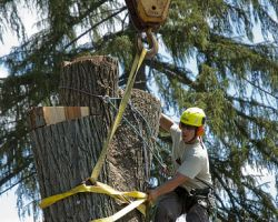 Oakland Tree Care Service