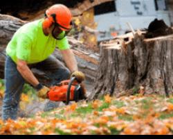 Quick Tree Service