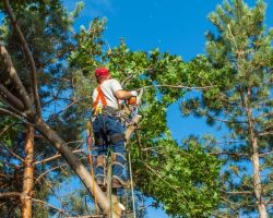 OKC Tree Service