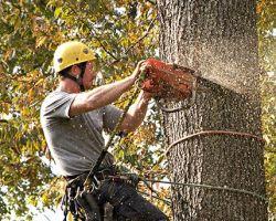 Sullivan Tree Service