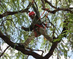 Alvin Tree Service