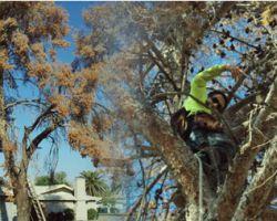 AZ Tree Trimmer