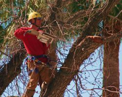 Top Leaf Tree Service