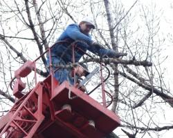 Arbor Art Tree Service LLC