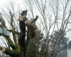 Tree Masters