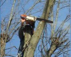 Amigo Tree Service