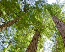 Bullards Tree Service