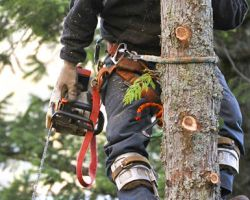 J&D Tree Pros Inc.