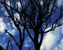 Linebergers Tree Service Inc.