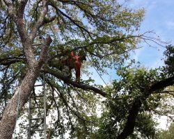 E & B Tree Service