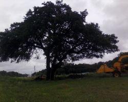 Rojos Professional Tree Service