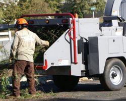 South Coast Tree Service
