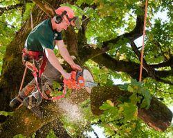 Tree Cutting Pros
