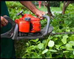 USA Tree Service Pros