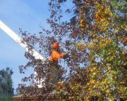 Bellizzi Tree Service