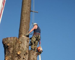 Archon Tree Services Inc