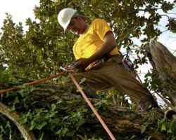 Kingwood Tree Service