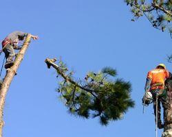 Triple Tree Service