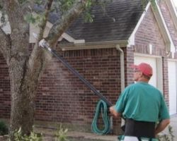 Colony Tree Service