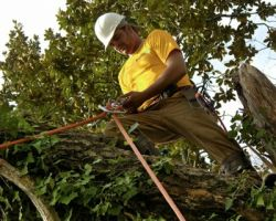 Tree Removal Sugar Land