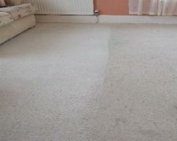 Area Wide Carpet Cleaning Inc.