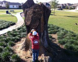 Champions Tree Preservation