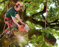 Tree Removal Experts