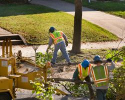 Tucson Tree Removal Service