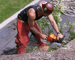 Nicks Tree Service Inc.