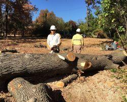 Rafaels Tree Service