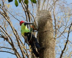 Butchs Tree Service Inc.
