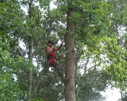 Partners Tree Care