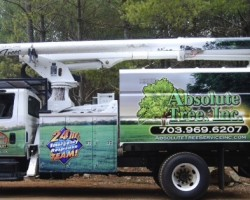 Absolute Tree Service Inc.