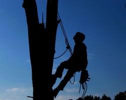 Freedom Tree Service