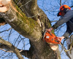Mulheron Tree Experts