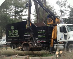 Nelson Tree Specialist